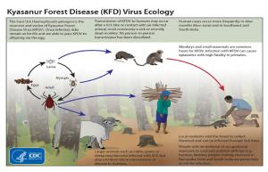 Virus Ecology