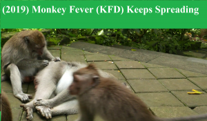 Monkey fever spreading